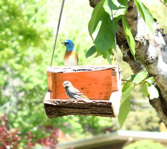 Build a feeder and two bird houses from a woodworking plan
